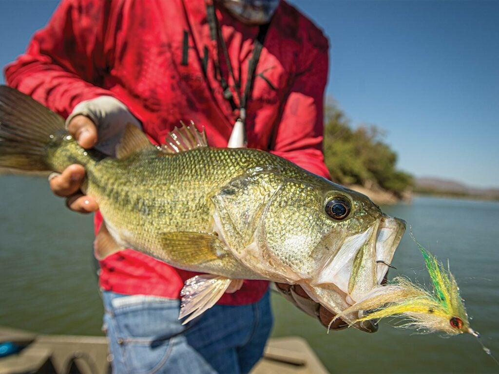 An angler holding up a largemouth bass.