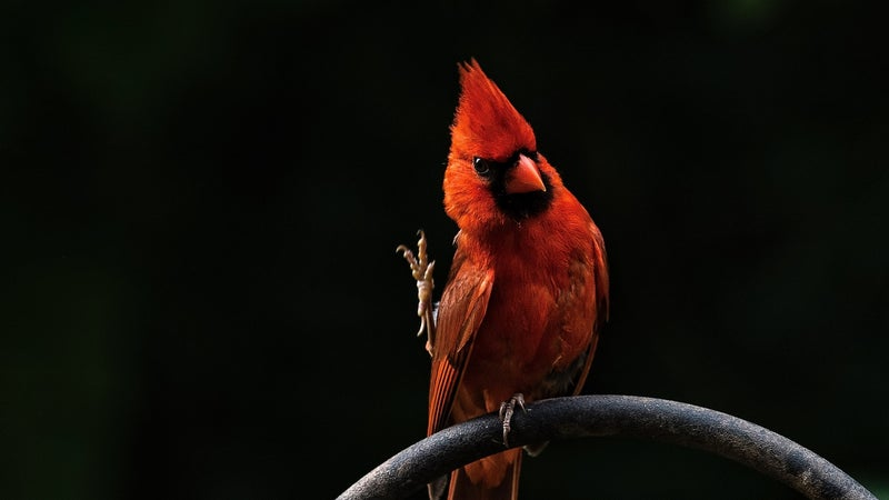 The Beginner's Guide to Birding in the U.S.