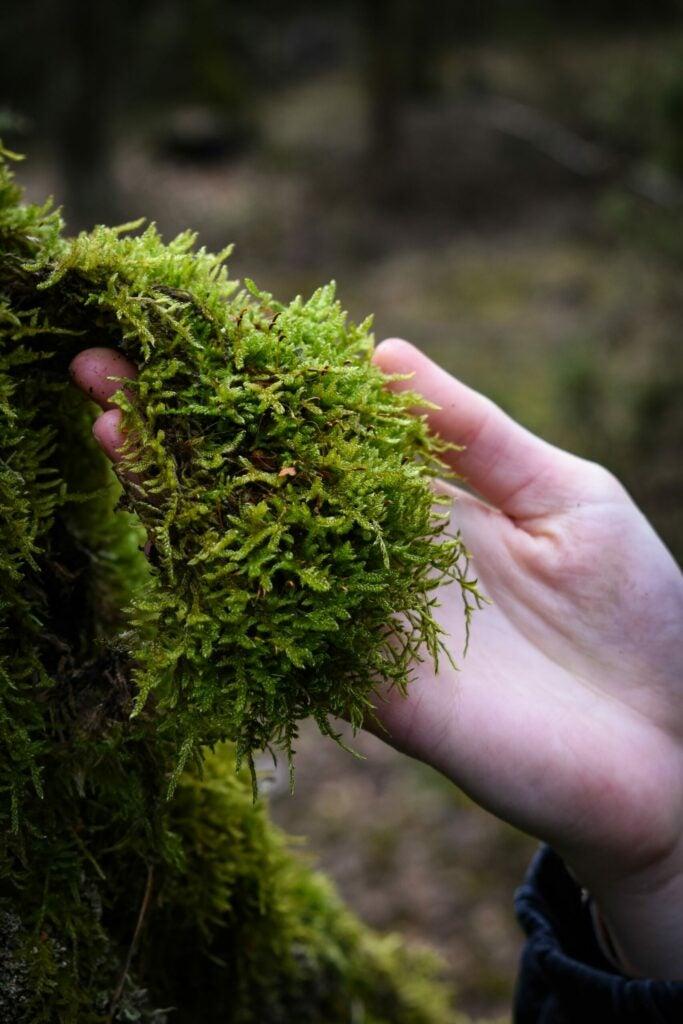 A handful of soft moss.