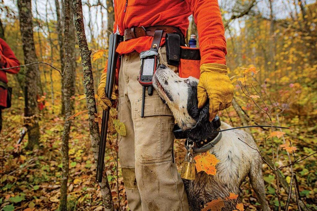 Hunting dog standing beside hunter.
