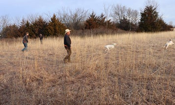 The Bird Dog Owner's Guide to Walking Field Trials