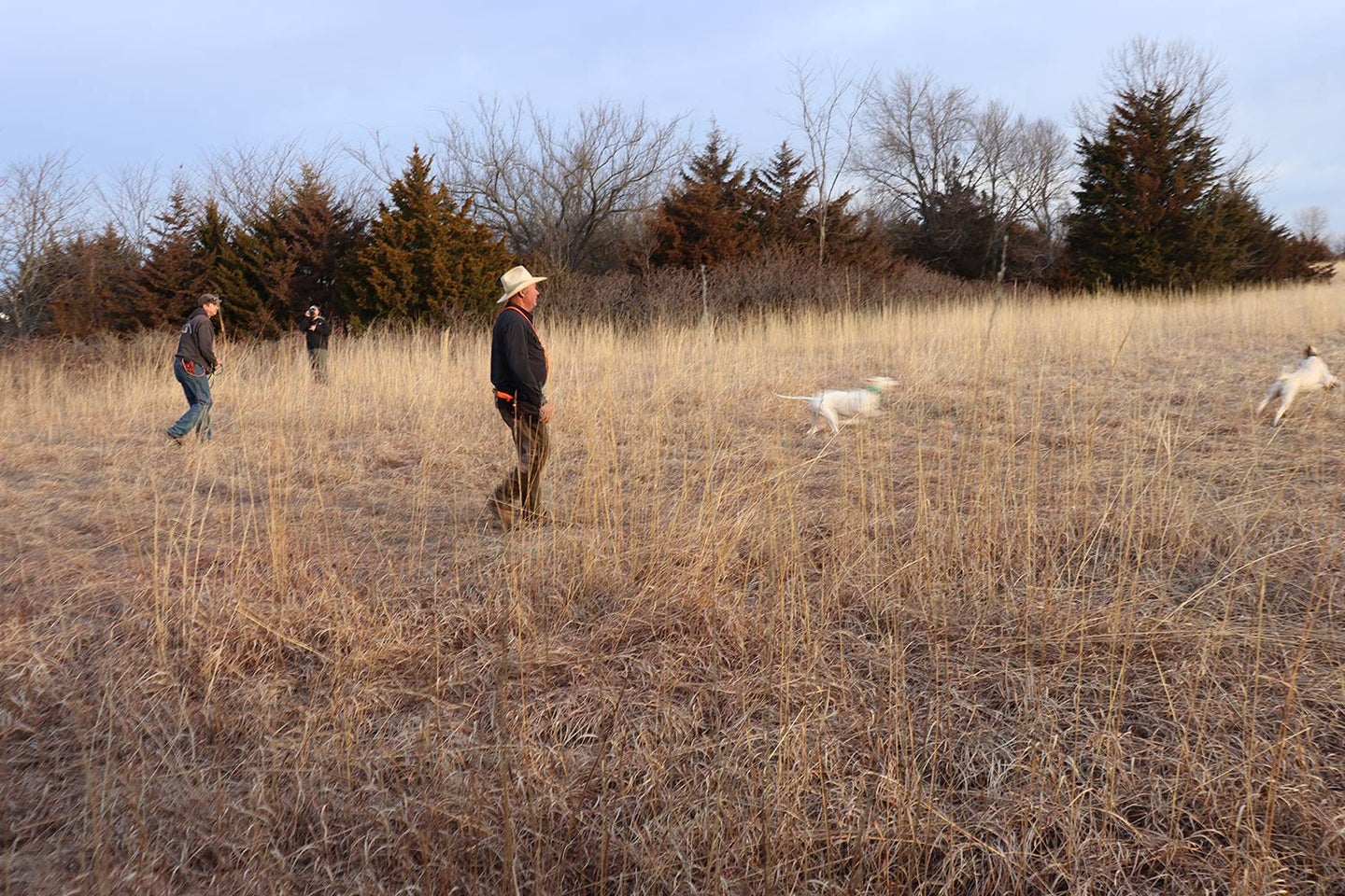 Hunters in a field with their hunting dogs.