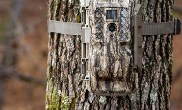 Three Types of Trail Cameras for Monitoring Wildlife