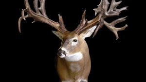10 of the Biggest Whitetail Shed Antlers Ever Found, Including Three World Record-Size Deer
