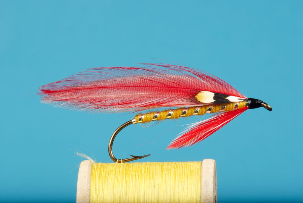 The Parma Belle fly fishing lure.