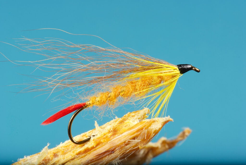 The Warden's Worry fly fishing lure.
