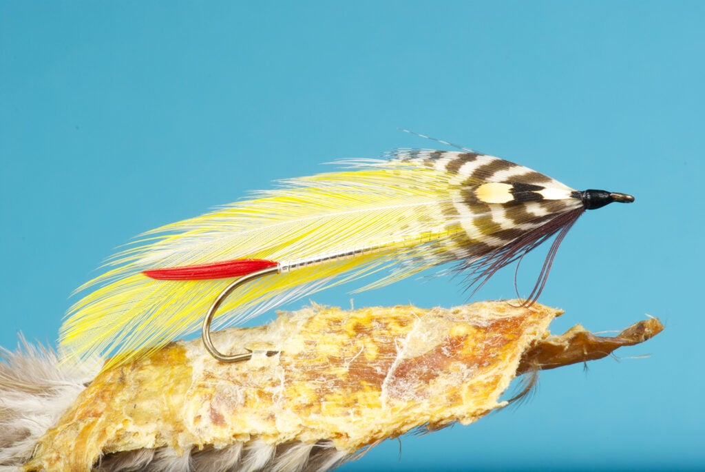 The Colonel Bates fly fishing lure.