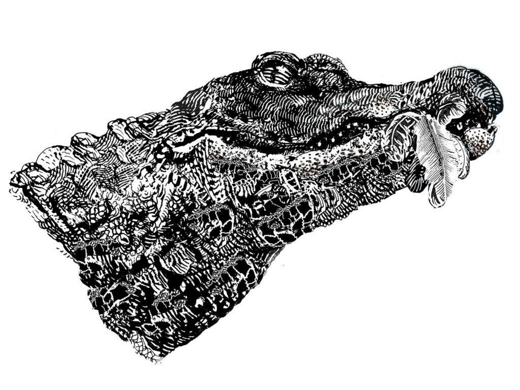 Illustration of an alligator.