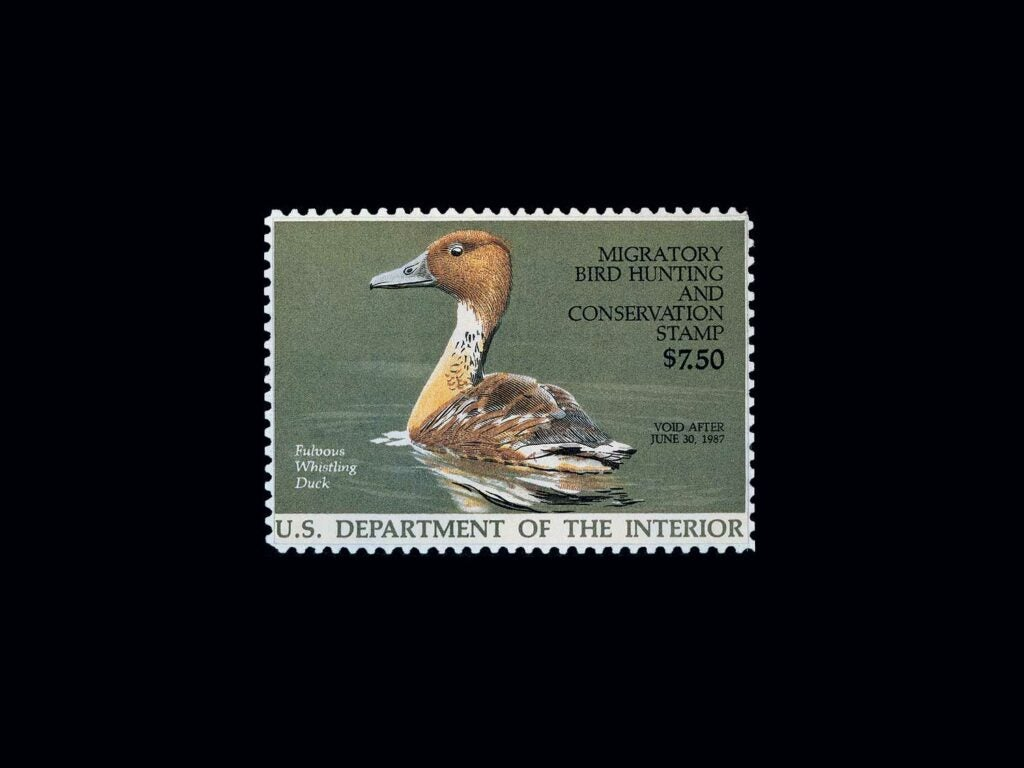 Fulvous Whistling Duck by Burton E. Moore, Jr. – 1986-1987 on a black background.