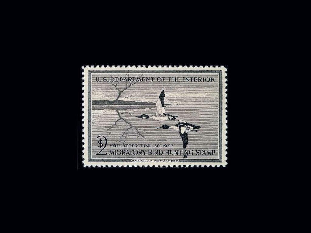 Common Mergansers by Edward J. Bierly – 1956-1957 on a black background.
