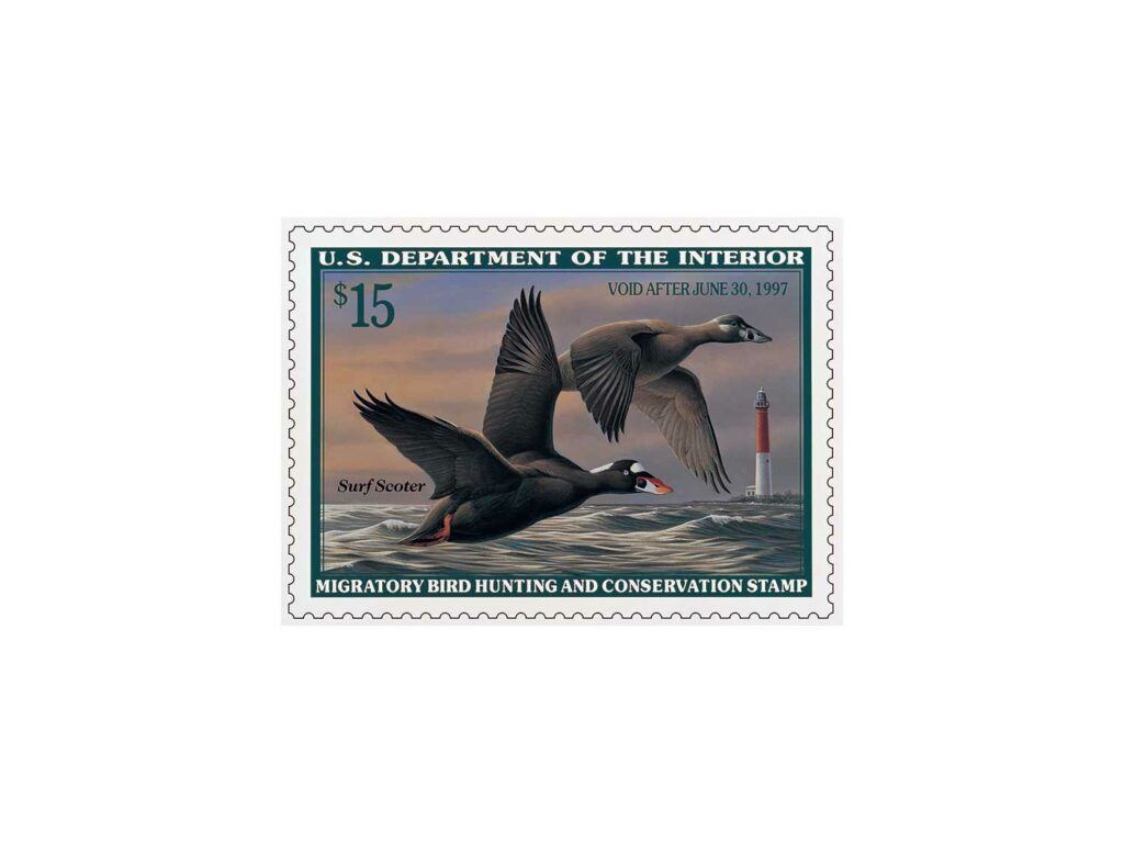 Surf Scoters by Wilhelm Goebel – 1996-1997 on a white background.