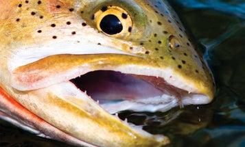The Best Cutthroat Trout Stream in America