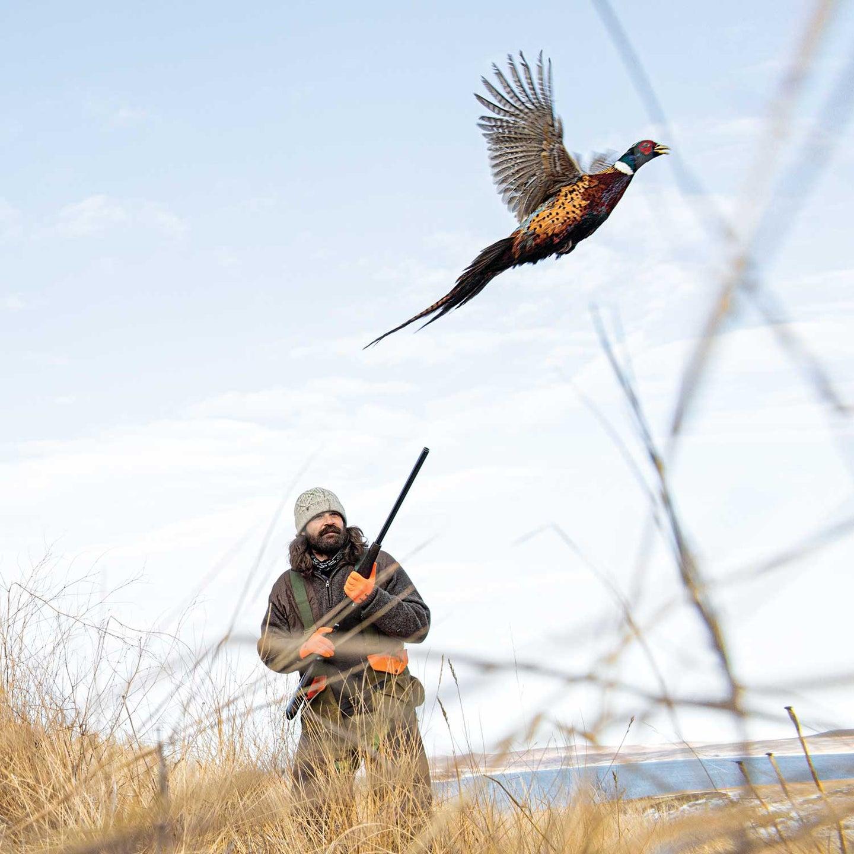 A hunter preparing to fire on a South Dakota ringneck pheasant.