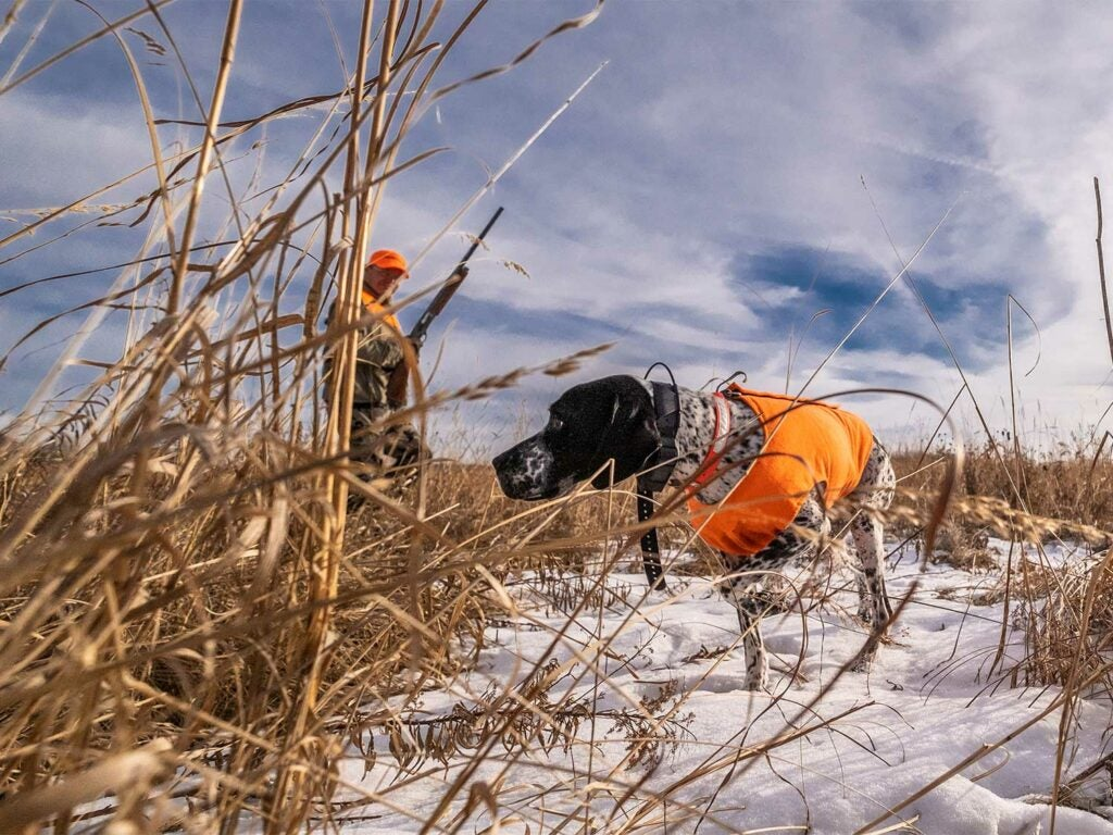 A hunter and a hunting dog breed in the snow.