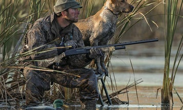 6 Hunting Dog Breeds That Make Good House Dogs
