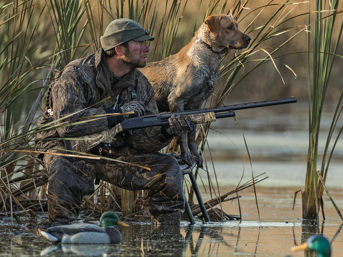 A hunter and a hunting dog duck hunting by a pond.