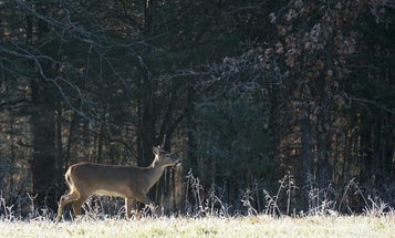 What Happens When a Wounded Deer Vanishes?