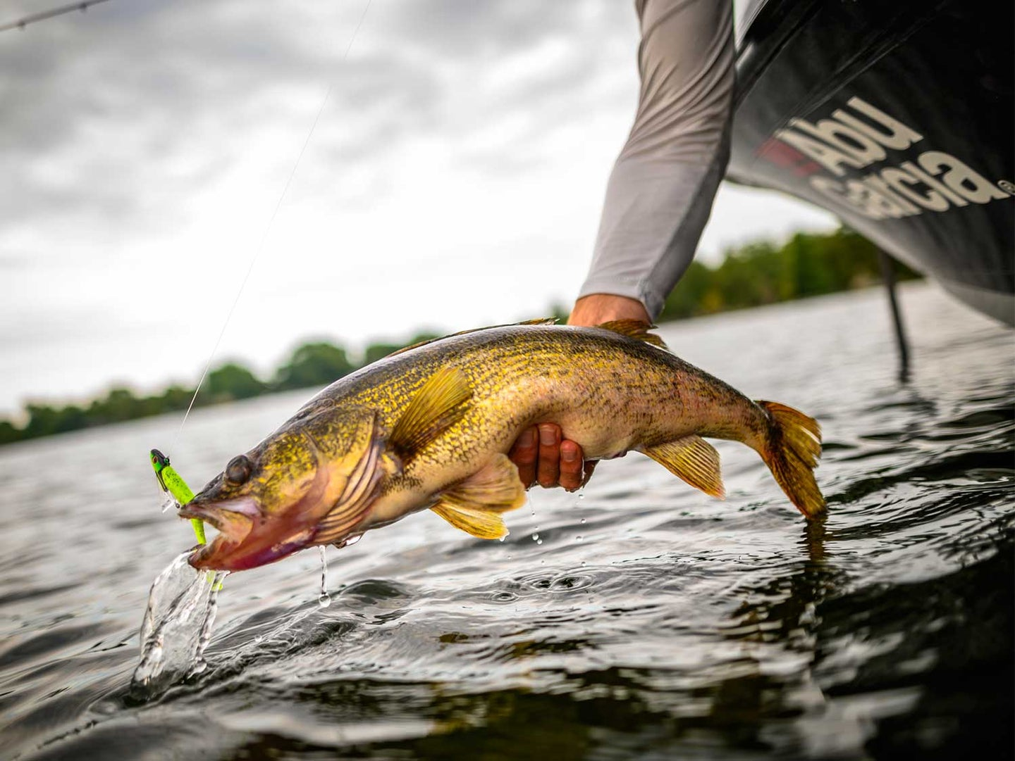 An angler pulling a walleye fish out of the water.