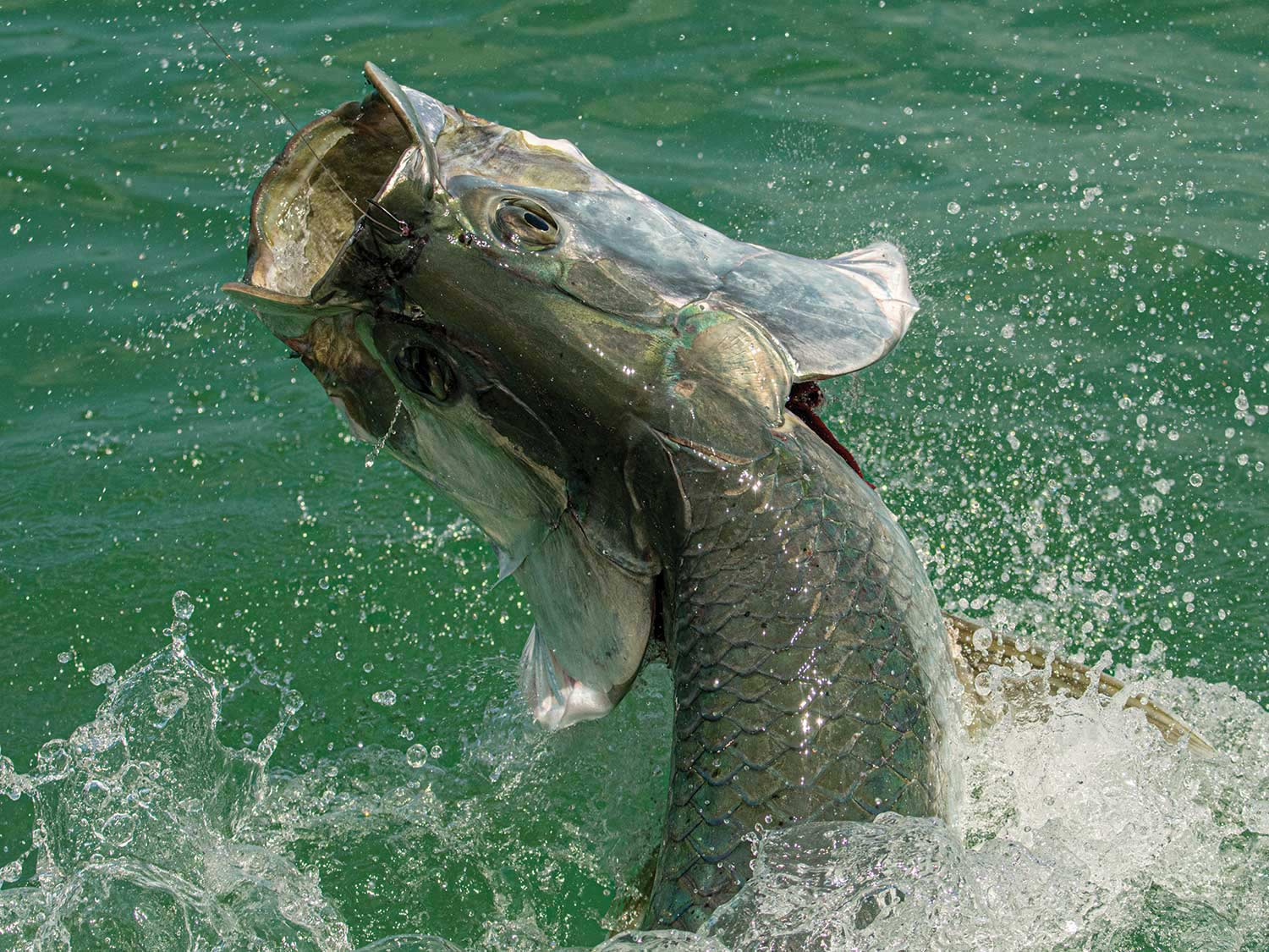 A fish breaking out of the water.
