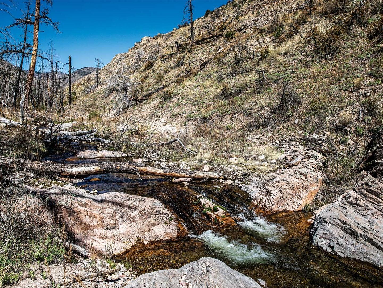 A small stream running through the Aldo Leupold Wilderness.