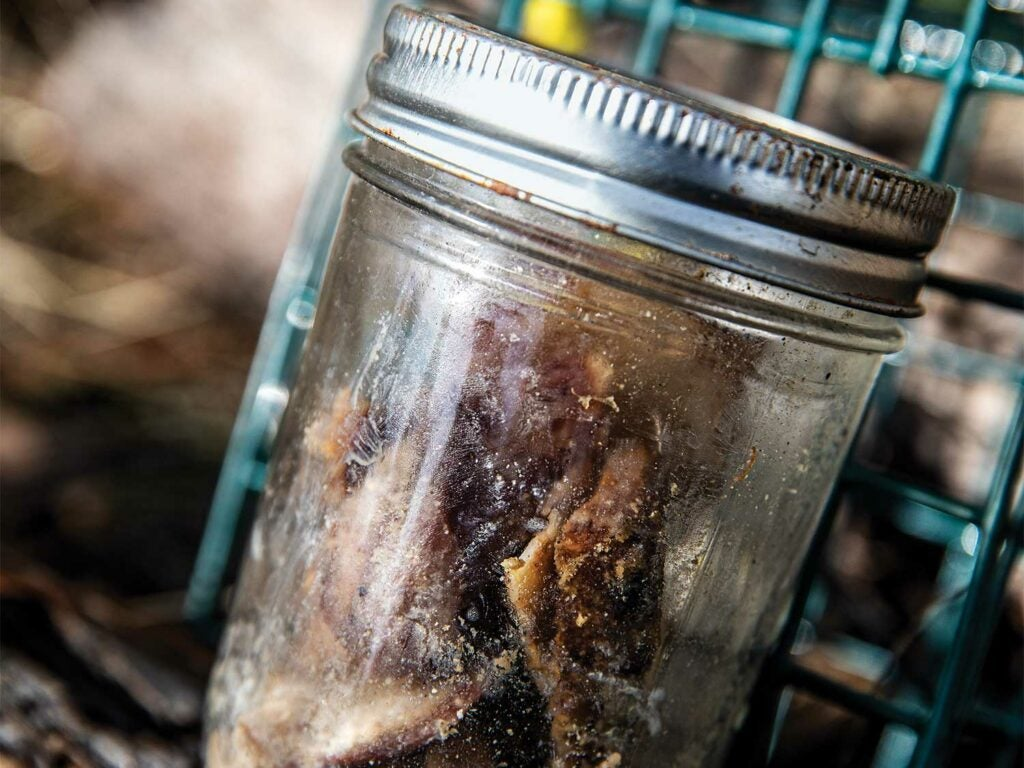A jar of cadaver used to train search and rescue dogs.