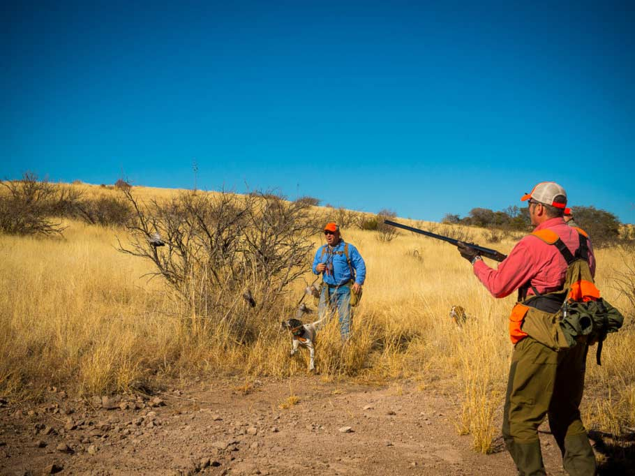 A few hunters in a field searching for quail.