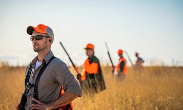 16 Expert Upland Bird Hunting Tips