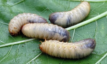 9 Bugs to Eat in a Survival Situation (And 4 You Want to Avoid)