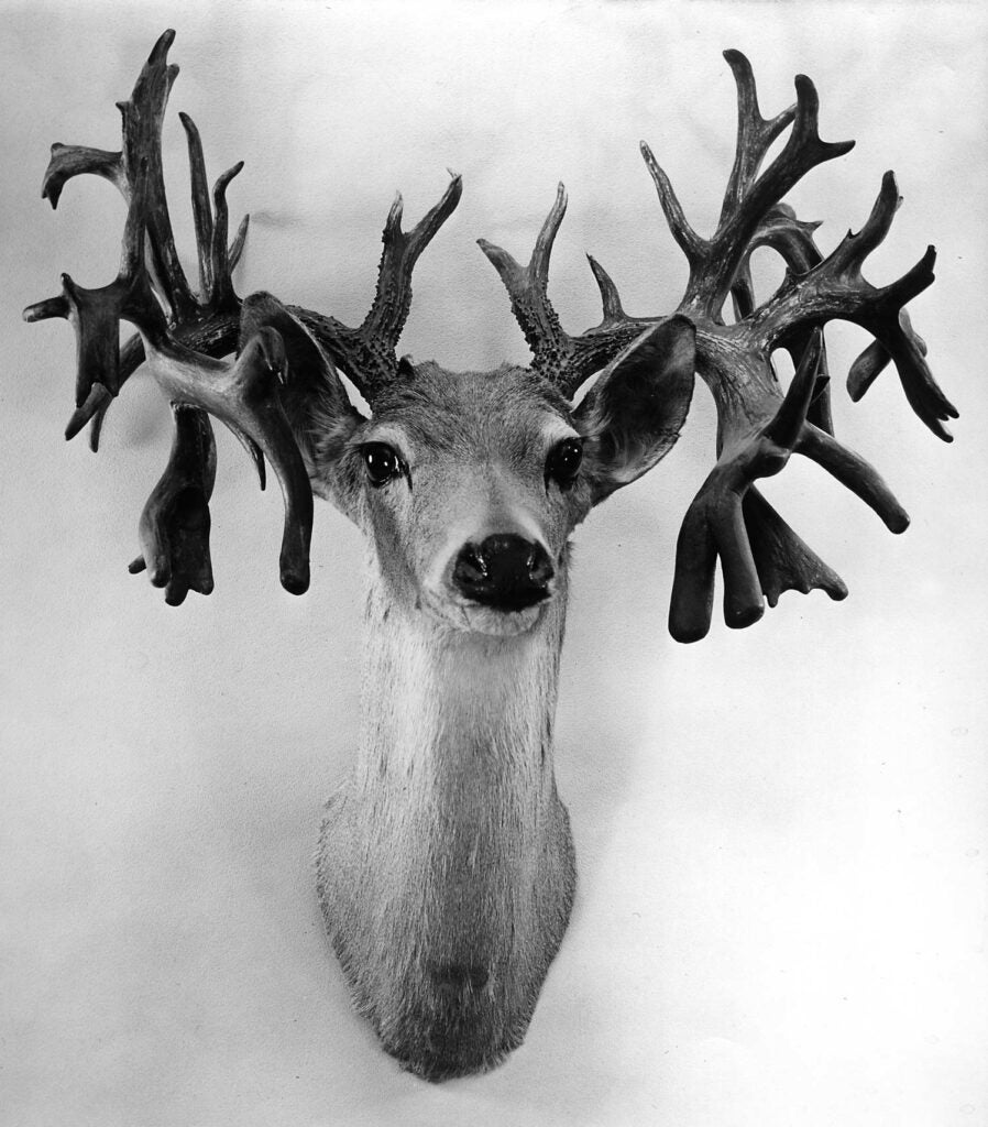 A black and white photo of a mystery whitetail record buck.