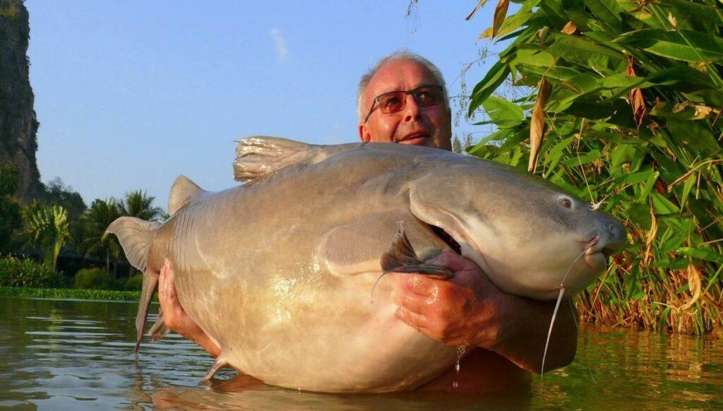 An angler holding up a large 125 pound Salween Rita catfish.