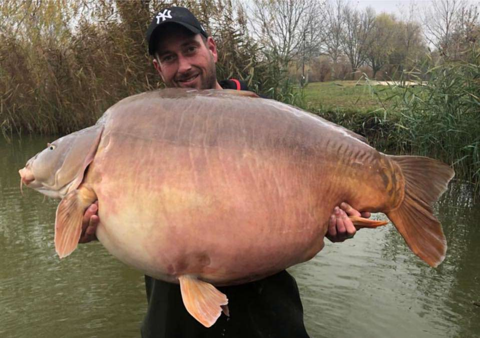 An angler holding up a one of the largest freshwater fish: a giant carp