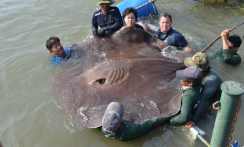 11 Giant Freshwater Fish that You've Probably Never Heard of Before