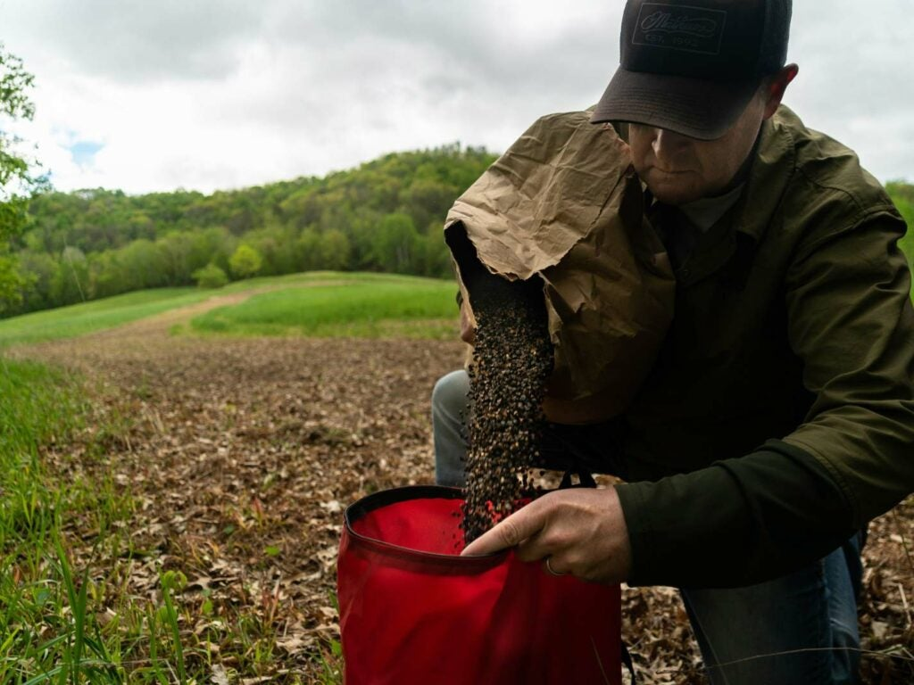A hunter with a seed bag spreads buckwheat seeds over a food plot.