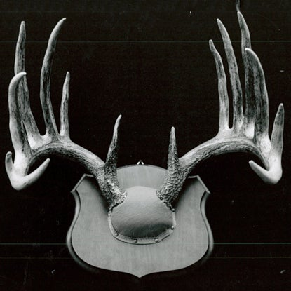 A black and white image of a trophy whitetail deer antler mount.