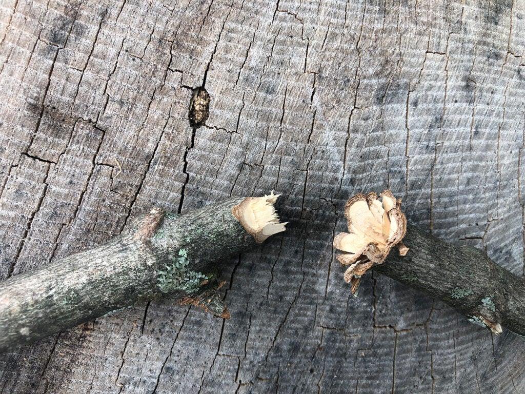 A branch of wood broken in half.