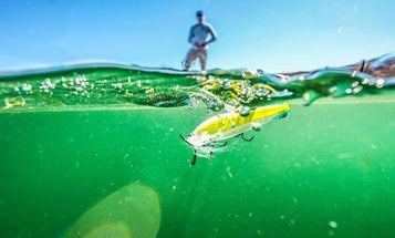 Five Tips for Catching Topwater Bass