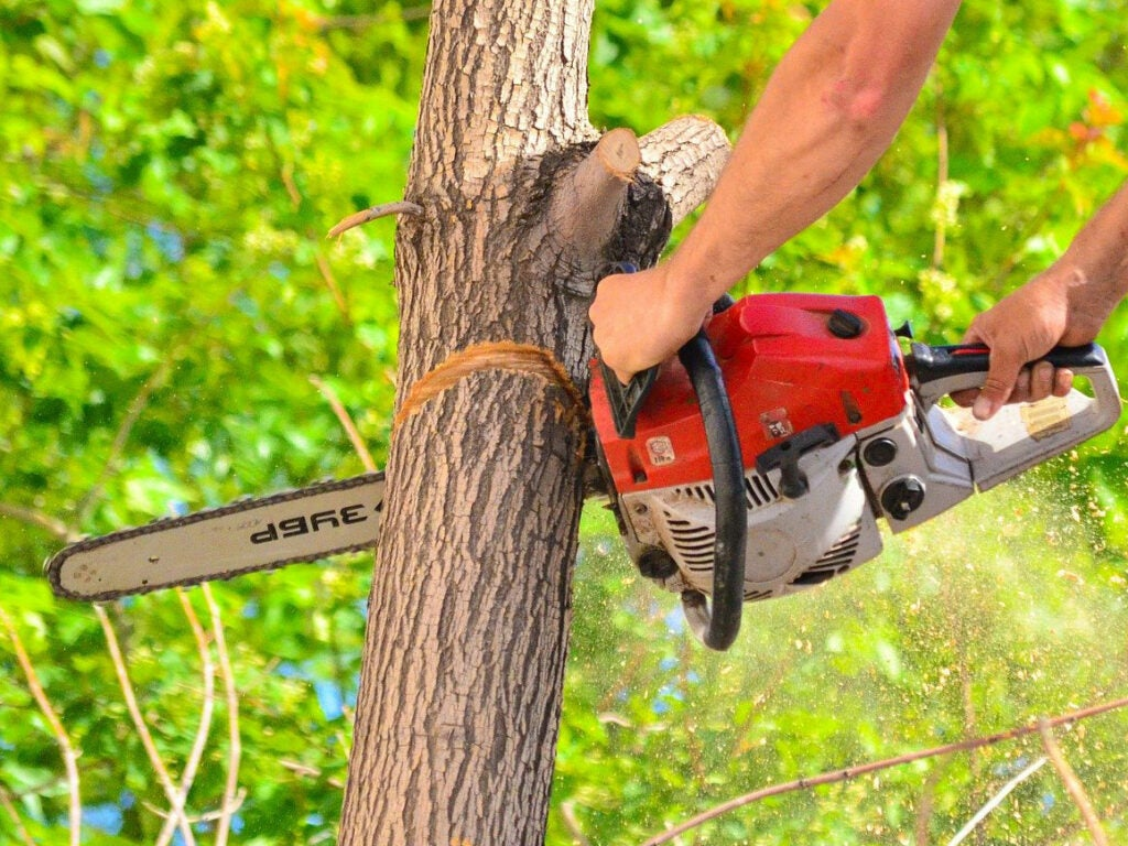 A man using a chainsaw to cut a hinge-cut in a tree.