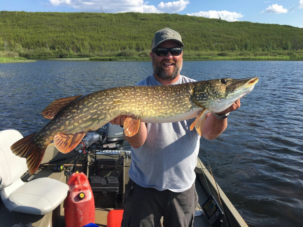 An angler holding up a large northern pike.