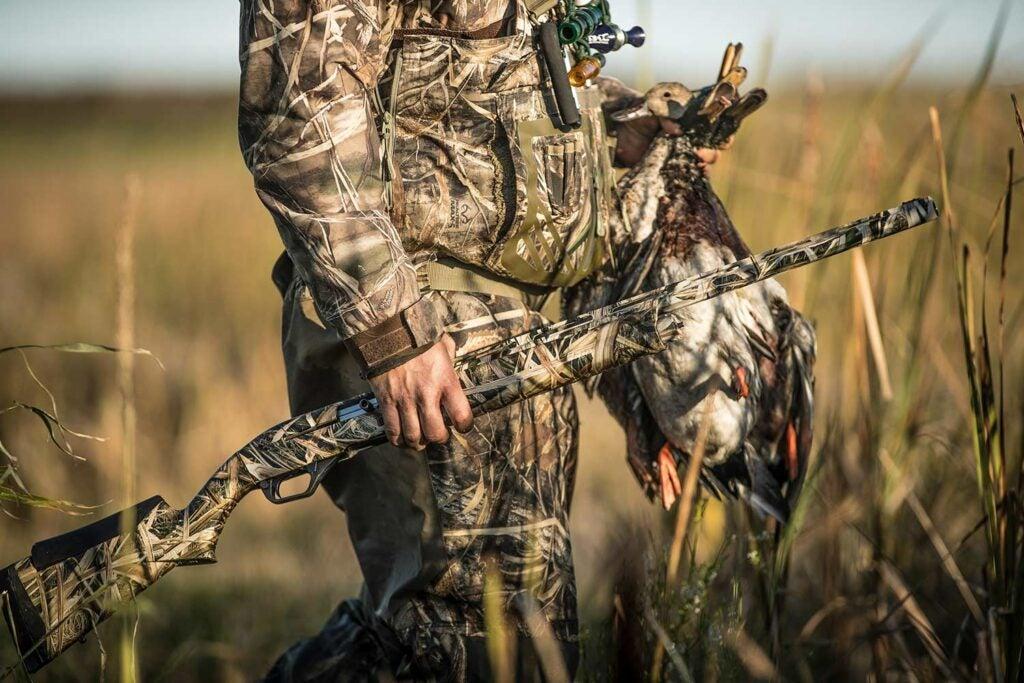 A hunter holding a shotgun and a limit of ducks walks through a marsh.