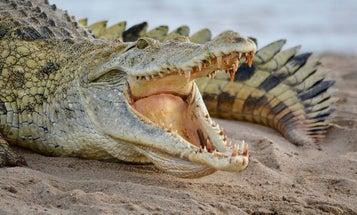 The 10 Deadliest Animals on Earth