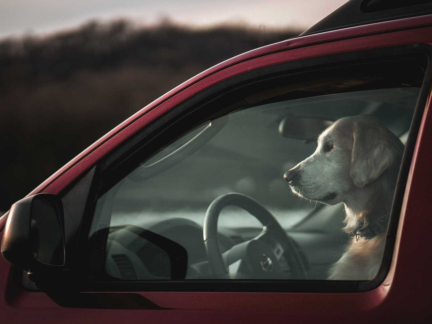 Dog in car sitting on dog seat cover.