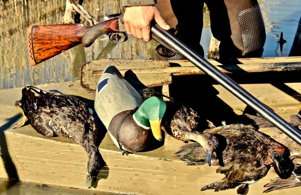 Mallard duck decoy with dead ducks in a boat.
