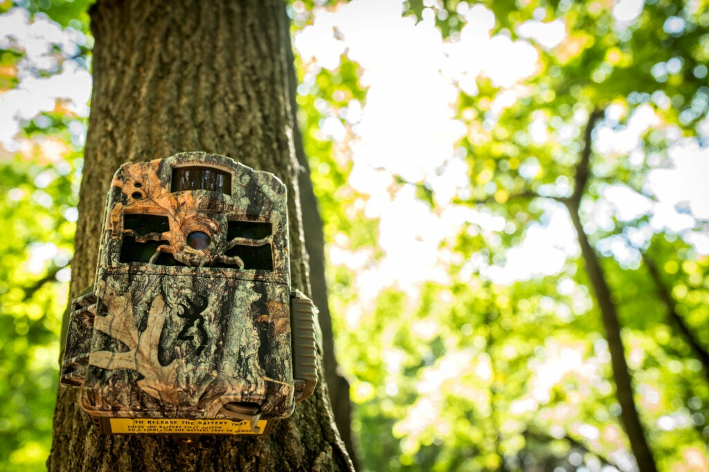 Trail Camera strapped to a tree.