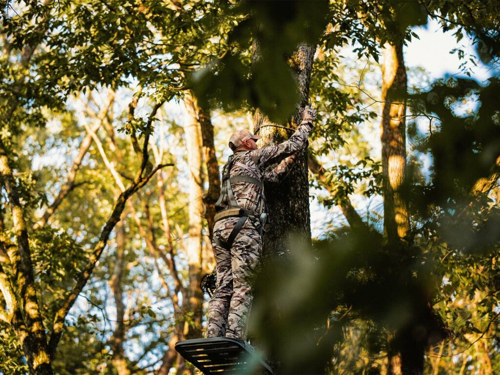 A hunter hangs a tree stand in a tree.
