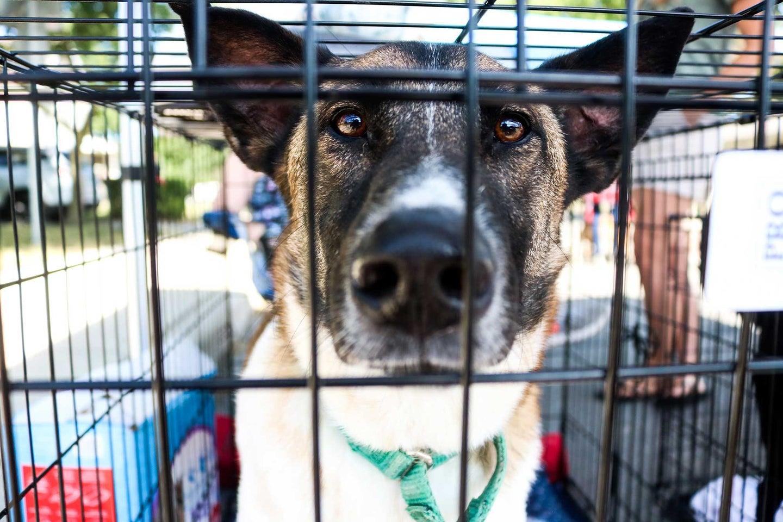 Big dog in a kennel