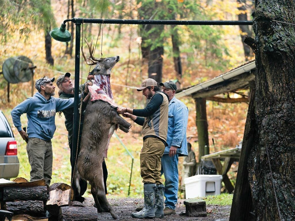 A group of hunters stand around a deer skinning it.