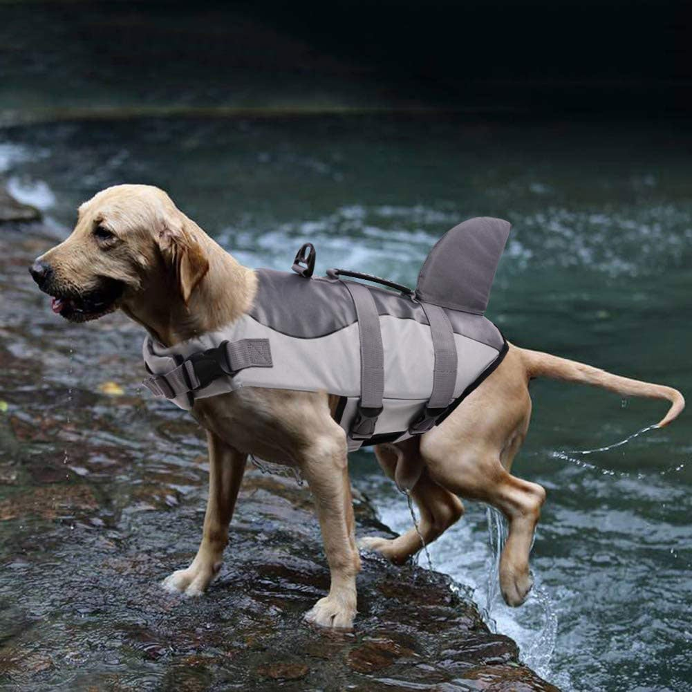 Dog wearing life jacket emerging from a lake