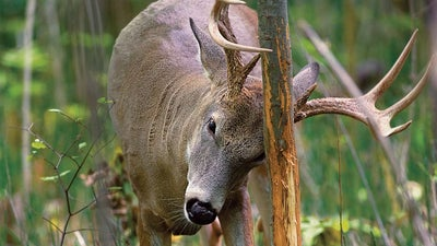 When Early-Season Bucks Vanish, Here's Where to Find Them