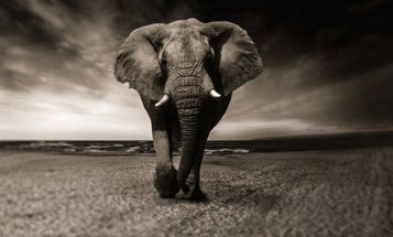 F&S Classics: The Elephants of Chirisa