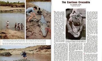 F&S Classics: The Cautious Crocodile